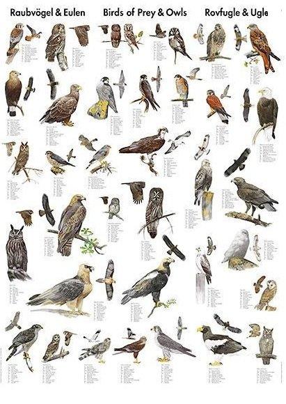 Naturplakater